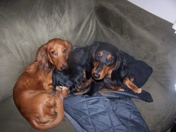 The red one's Jake, the Black and Tan is Elwood.